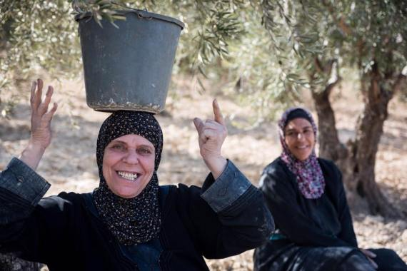 Palestinian women picking olives.