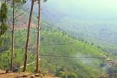 Munnar Tea Plantations (6)