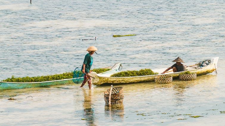 Nusa Lembongan and Nusa Ceningan. Seaweed farmer