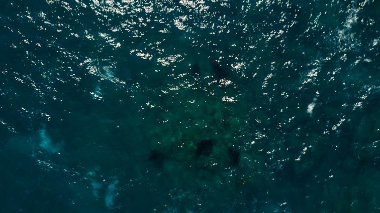 Nusa Penida. Manta rays