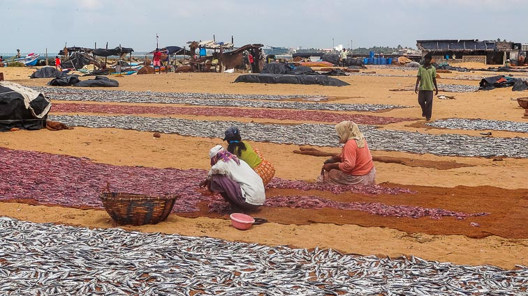 Things to do in Sri Lanka. Negombo Fish Market
