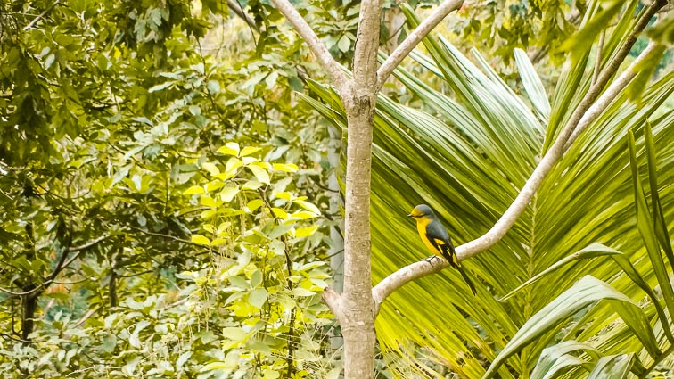 Things to do in Sri Lanka. Bird spotting