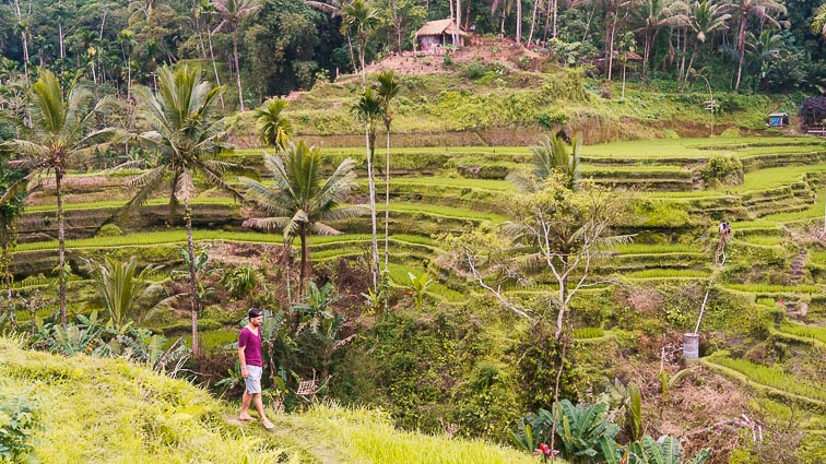 Bali Itinerary. Erick in the rice paddies