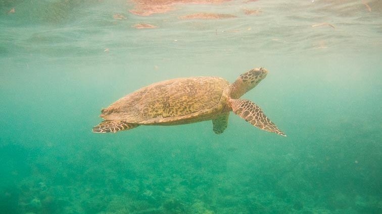 Bali Itinerary. Turtles on The Gili's