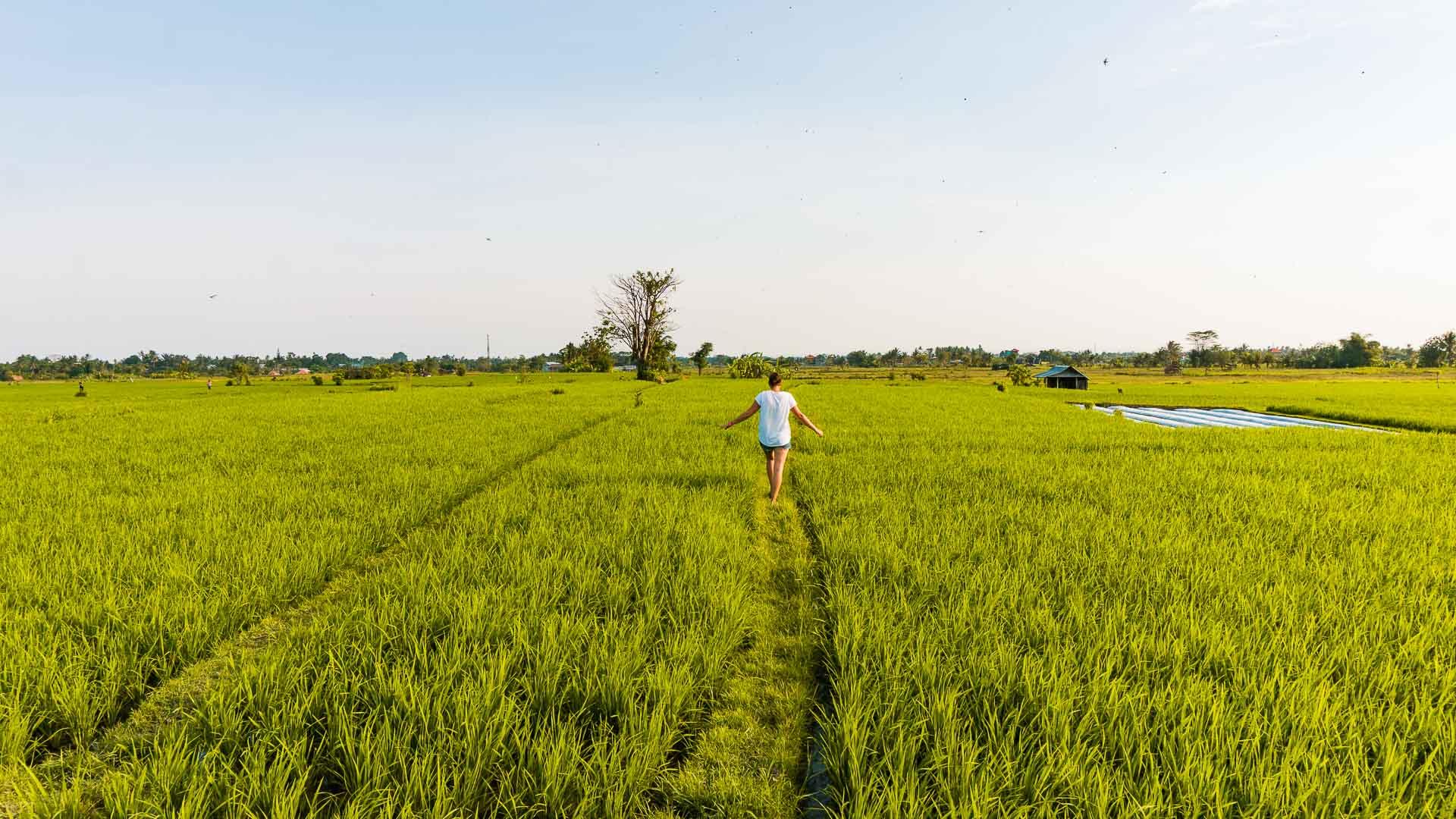 Bali Itinerary. Rice paddies