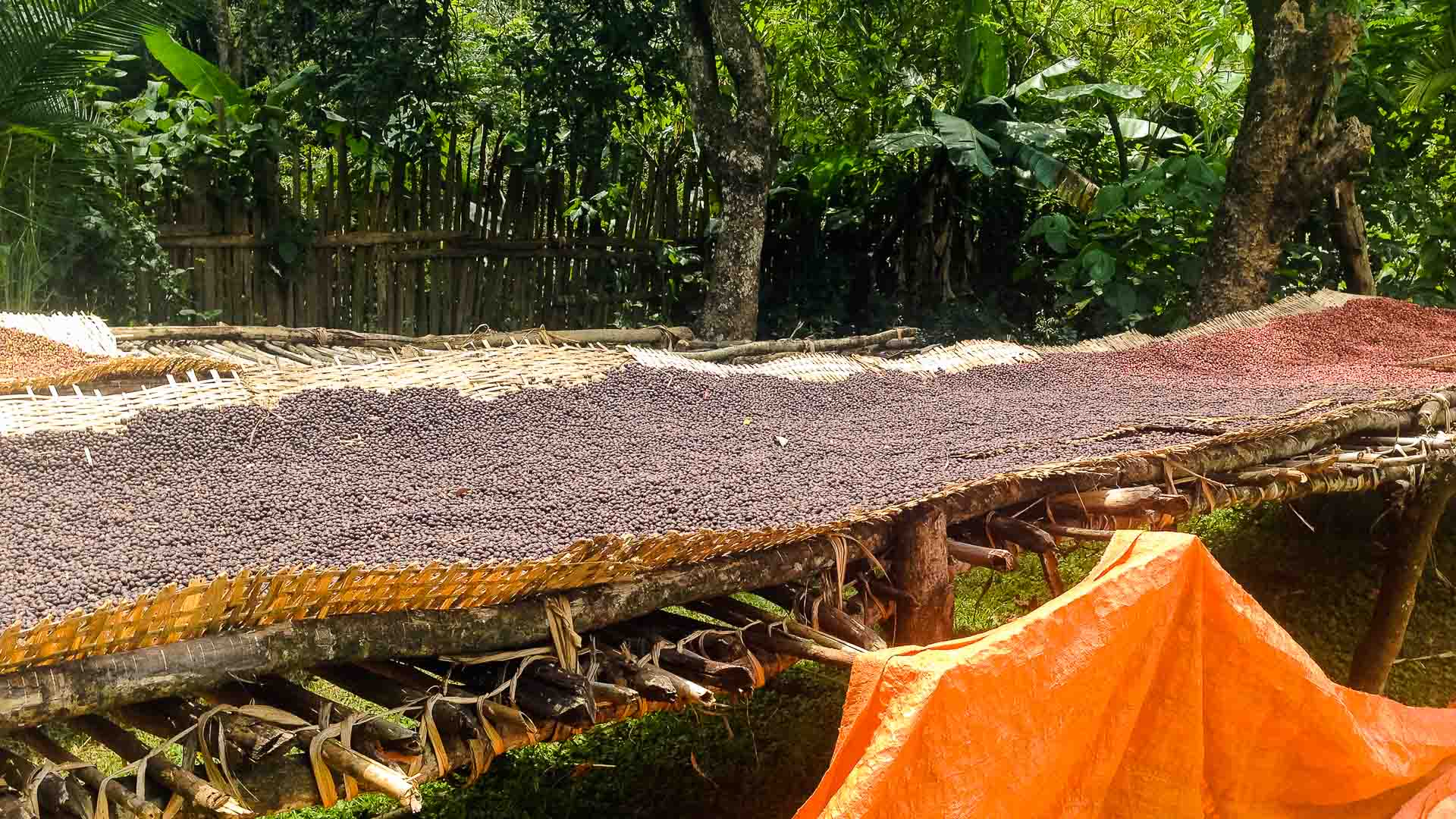 Harvested coffee in Yergalem, Ethiopia