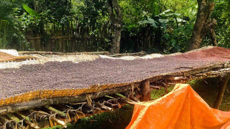 Harvested coffee in Yergalem, Ethiopia