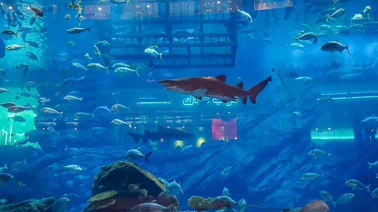 The public aquarium in the Dubai Mall (one of the best free things to do in Dubai)