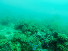 Fish! (GoPro)