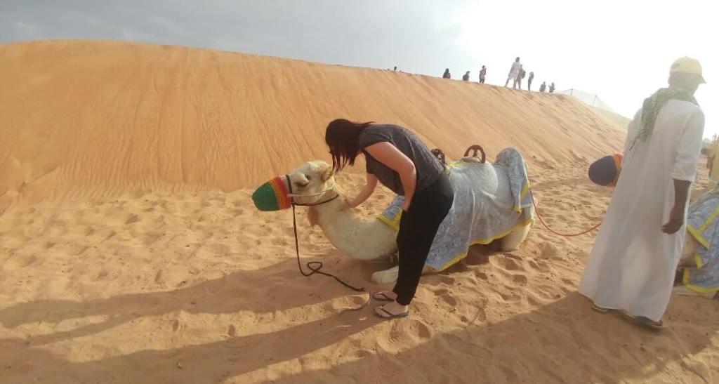 camel, desert safari