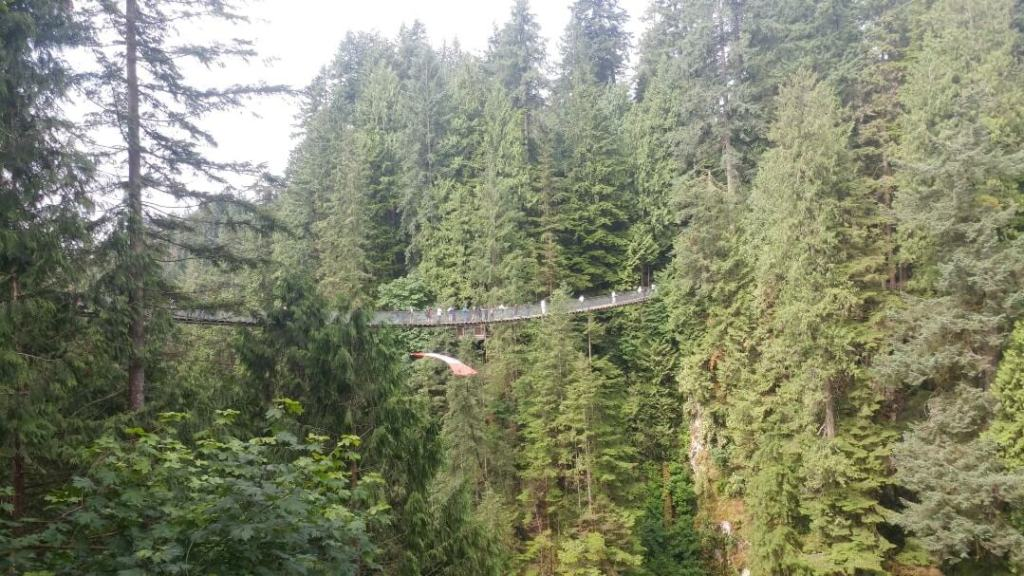 Capilano Suspension Bridge, park, forest