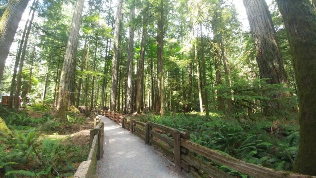 Cathedral Grove, trees