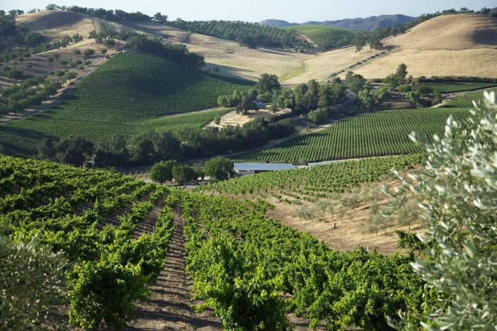 The Posh Side of Paso Robles
