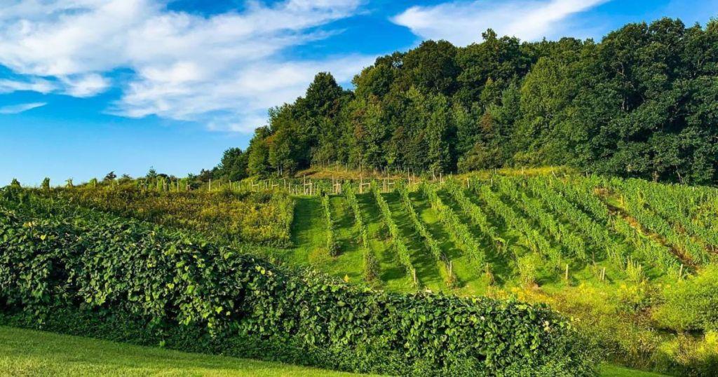 The best wineries in Virginia