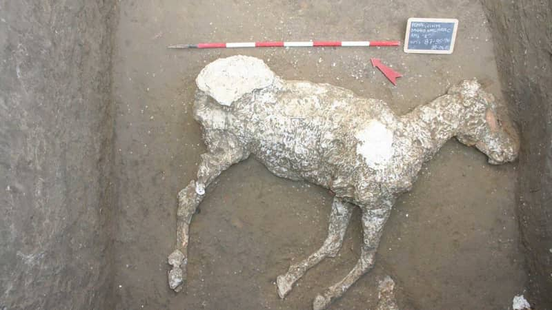 The bodies of three thoroughbred horses were discovered in the dig at Civita Giuliana