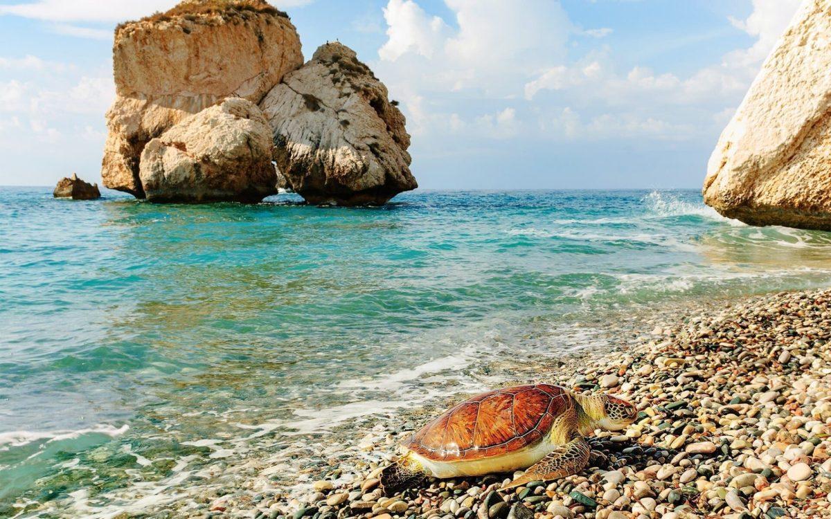 Turtles on a Cyprus beach