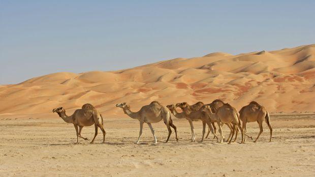 Saudi Arabian desert travel