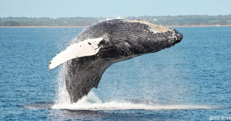 Maui, Hawaii Best Places for Humpback Whales Watching