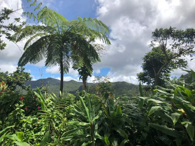 Visit El Yunque National Forest, Rio Grande 7 Best Places to Travel in Puerto Rico