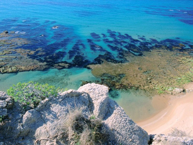 Torre Salsa Sea Turtle Territory