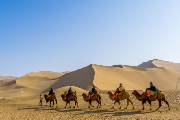 Bactrian camels in Gobi Desert