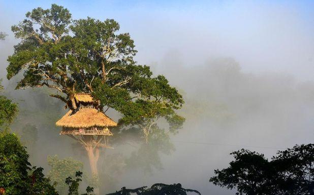 Experience Gibbon Tree Houses