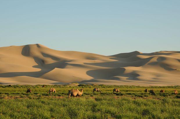 Khongor Sand Dune in Gobi Desert