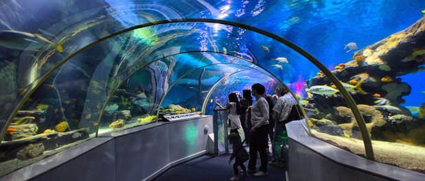 National Sea Life center
