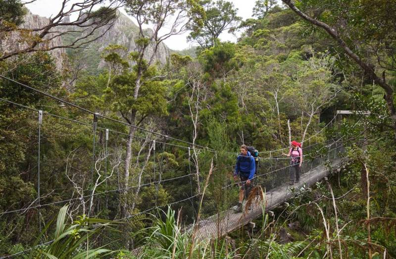 Hikes in Great Barrier Island