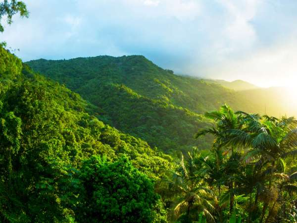 Puerto Rico Rainforest: Everything About El Yunque