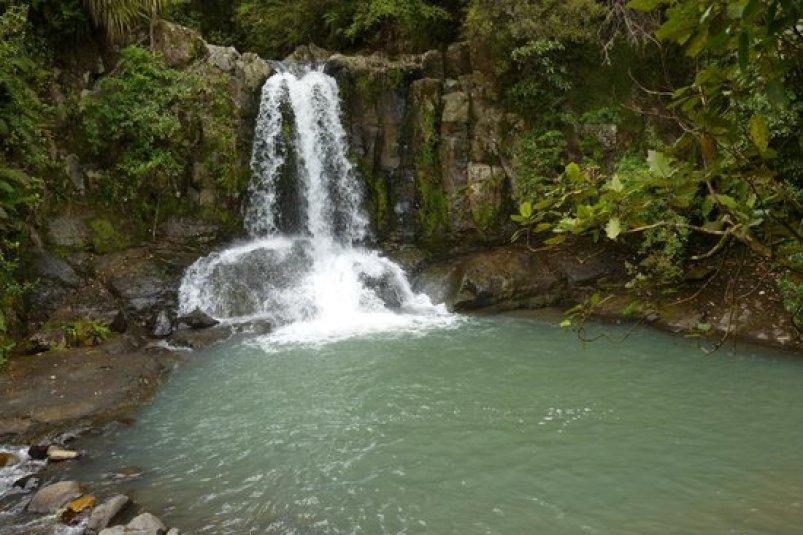 Visit Kauri Falls