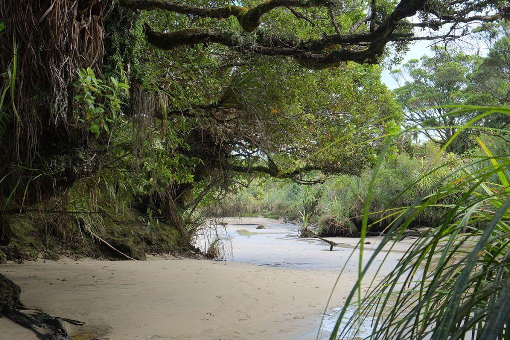 Kahurangi National Park West Coast, South Island New Zealand