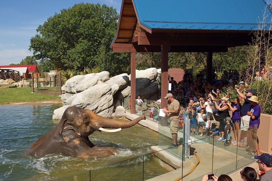 Visit The Denver Zoo Things to do in Denver