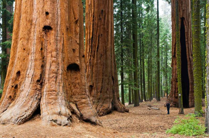 Visit Unique Sequoia National Park, Things to do in California