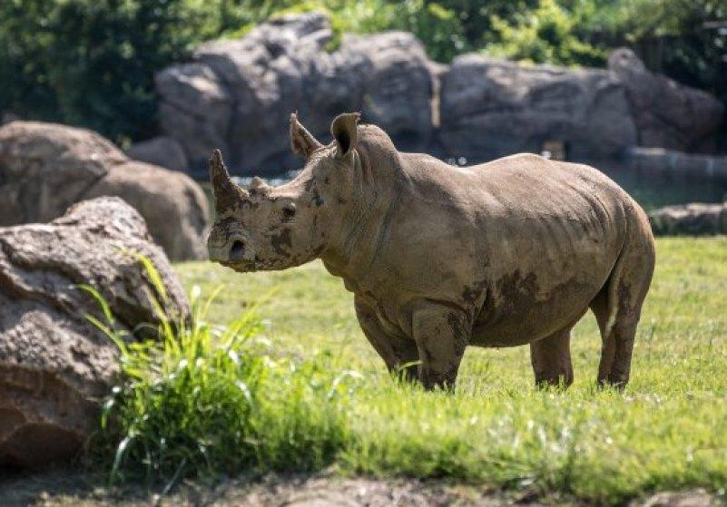 Visit Nashville Zoo, Tennessee