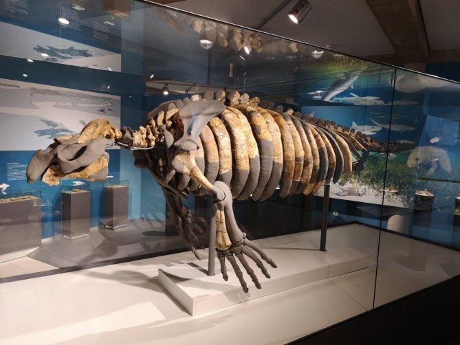 Visit the Texas Memorial Museum