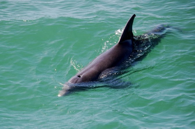 Dolphin Tour in Tampa Bay