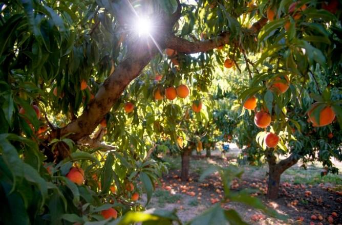 Pearson Farm in Georgia