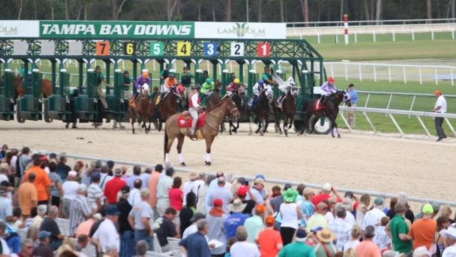 Watch Horse Racing in Tampa Bay Downs