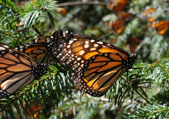 Things to Do in Scottsdale Butterfly Wonderland