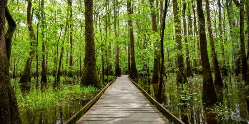 Top 40 Things to do in Columbia SC, USA