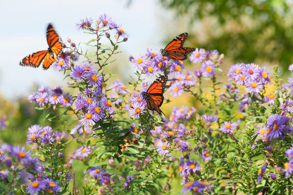 Waco Carleen Bright Arboretum