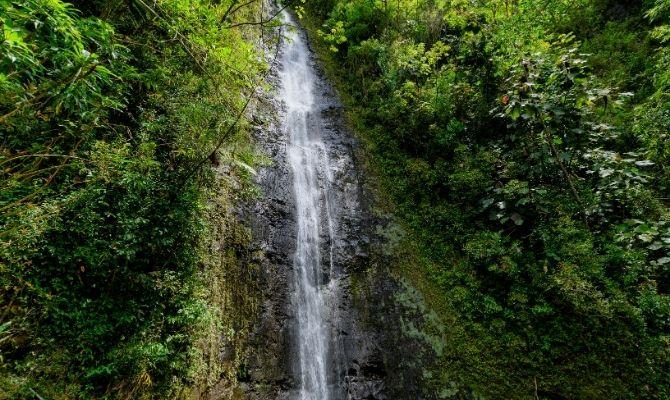 Lyon Arboretum and Manoa Falls