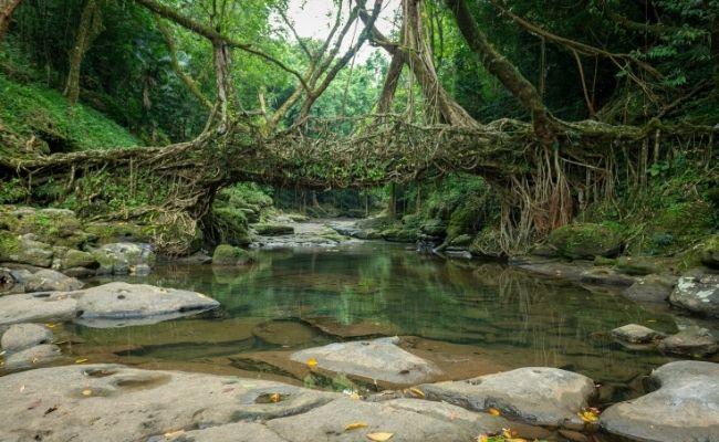 The Root Bridges Cherrapungee