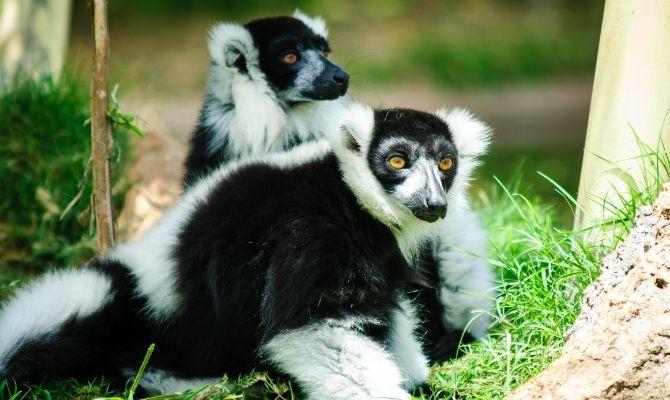 Things to Do in Honolulu Honolulu Zoo