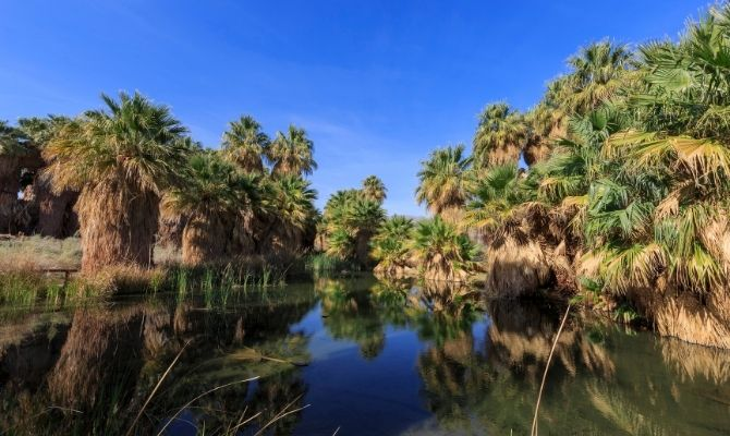 Coachella Valley Preserve Palm Springs