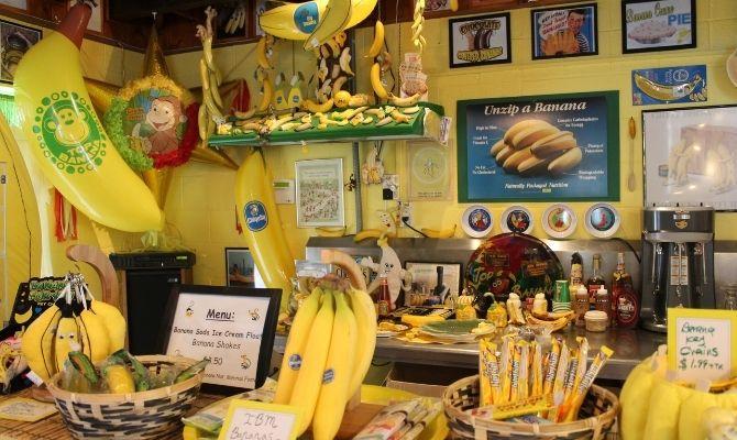 International Banana Museum California