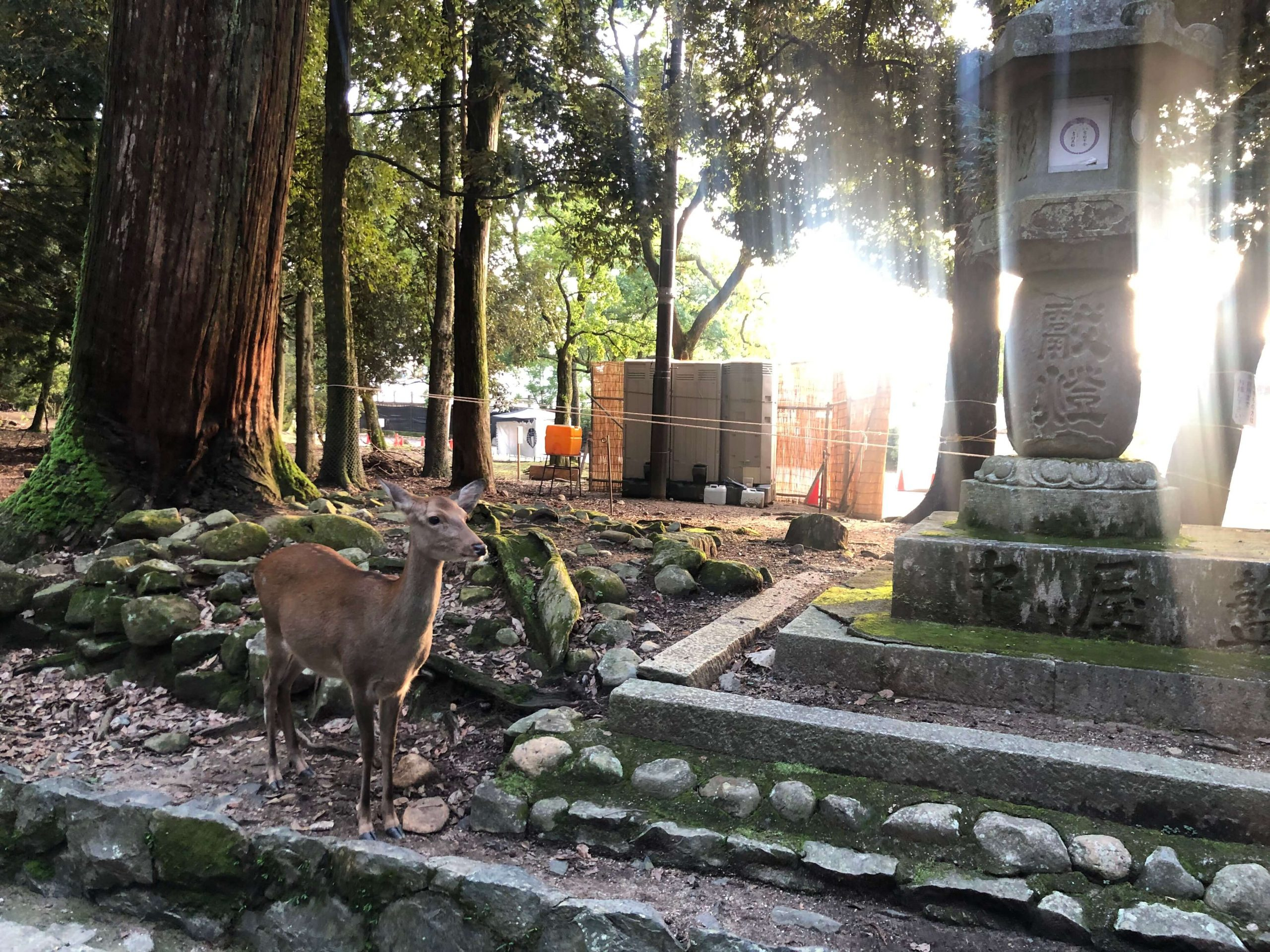 A day trip to Nara | Ultimate Guide