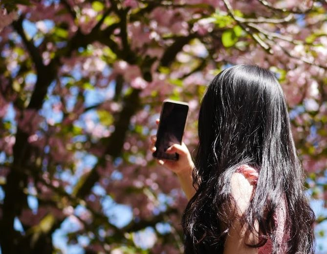 Greenwich Park Cherry Blossoms | Ultimate Guide