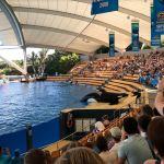 Loro Parque Tenerife Review | Costa Del Sol